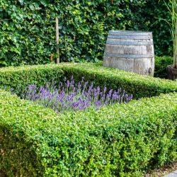 Garten mit gepflegter Hecke