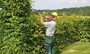 Gartenbau Im Raum Münster Ahlen Hamm ǀ Tripp Galabau