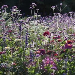 Flächige Bepflanzungen