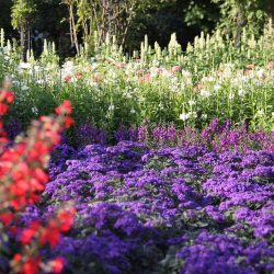 Flächige Bepflanzung