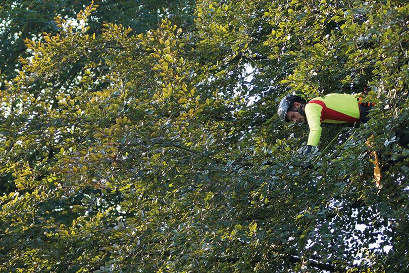 Baumkontrolleure baumkletterer baumpfleger unser team - Stefan tripp garten und landschaftsbau ...