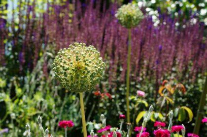 Insektenfreundliche Blüte